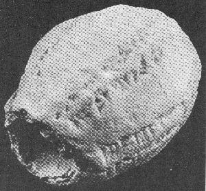 EGG-Shaped hollow tablet.